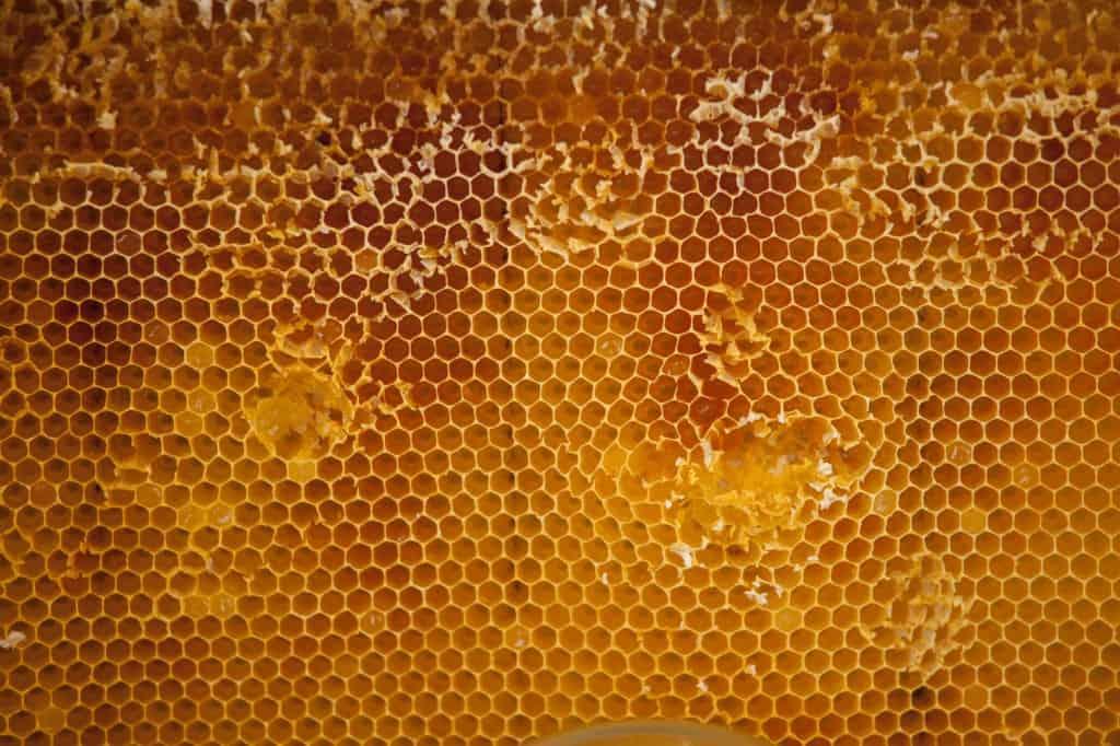 Bivax är en naturlig ingrediens i många av marknadens främsta skovårdsprodukter. Bild: Fotoakuten